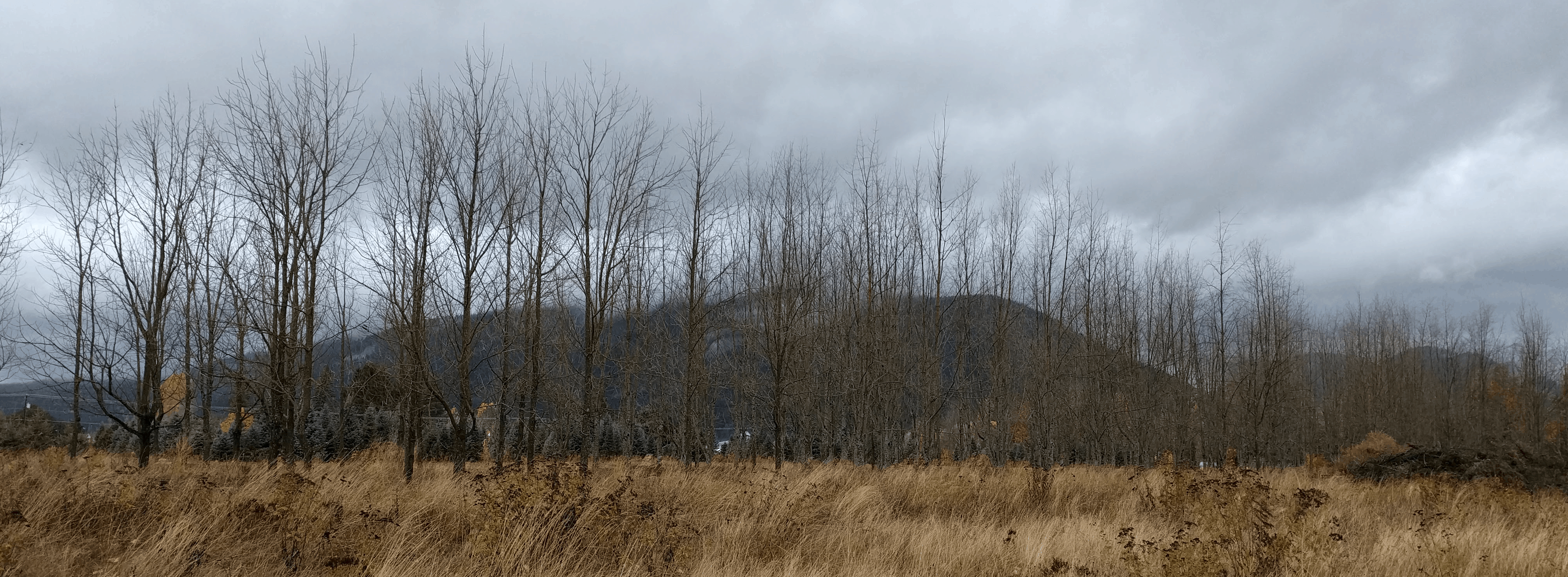 Picture of some trees and mountains on Reformation Day