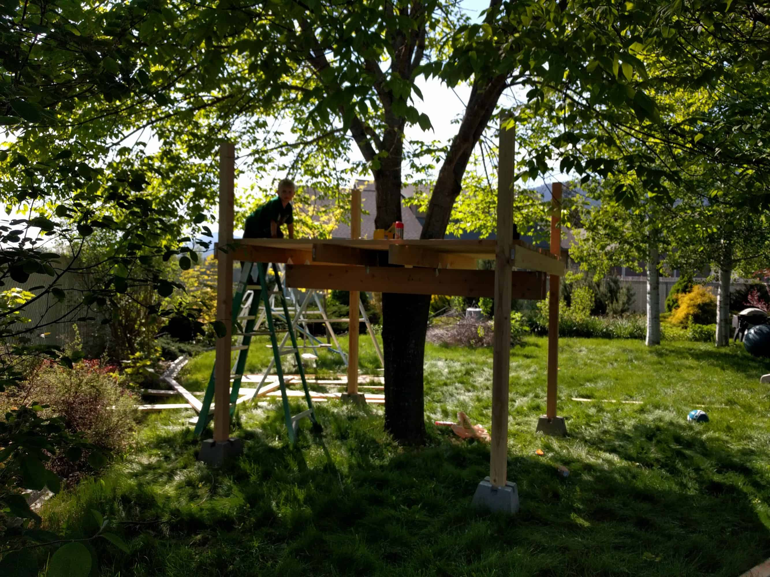 Eli partway on ladder and treehouse surveying floor