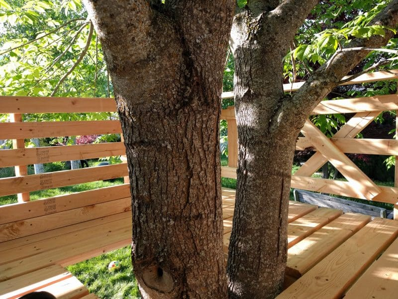 Inside the tree house-- tree trunk coming up in the middle.