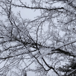 Snowcicles | Hoarfrost or Rime?