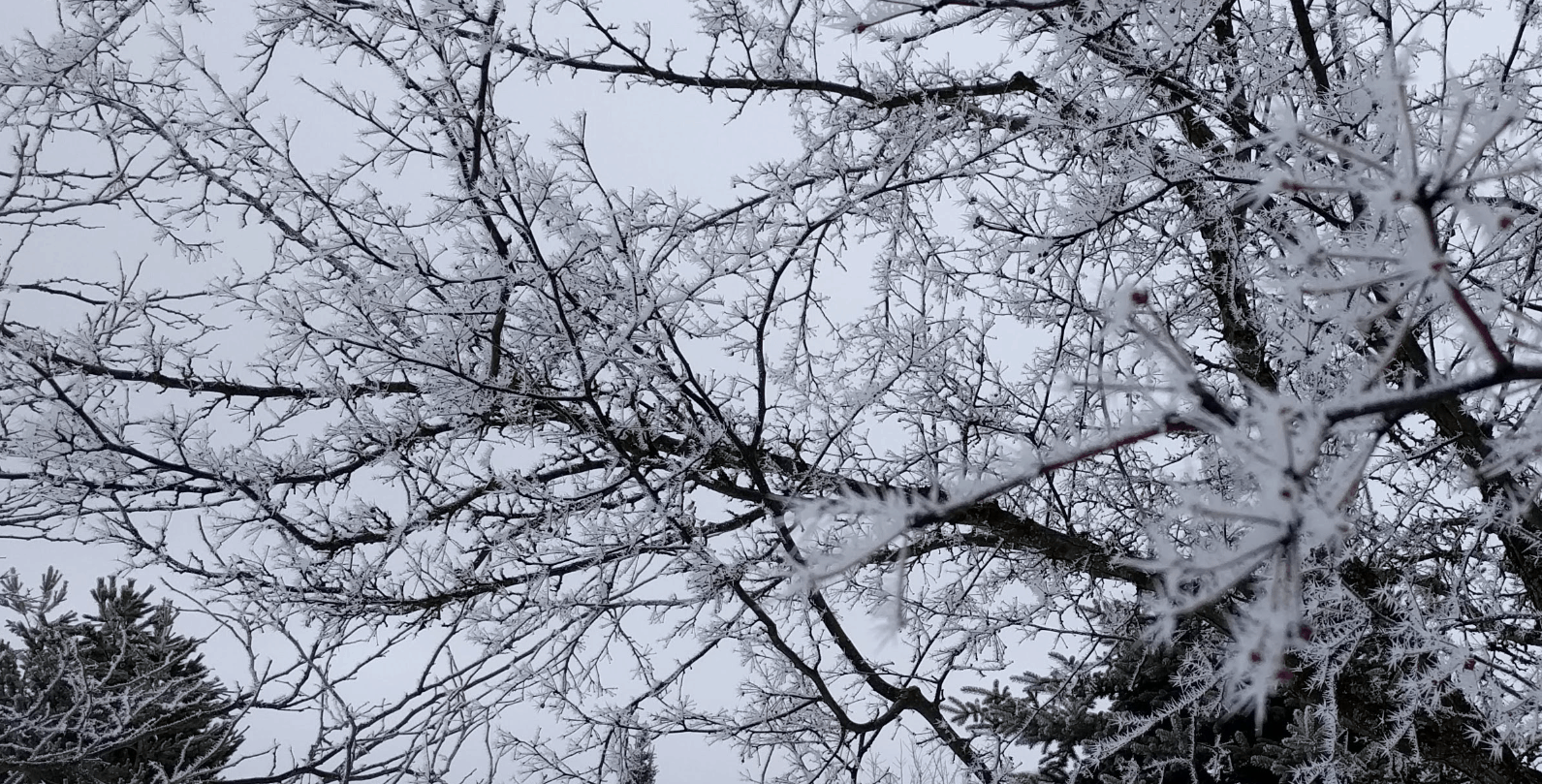 Snow spikes all over tree