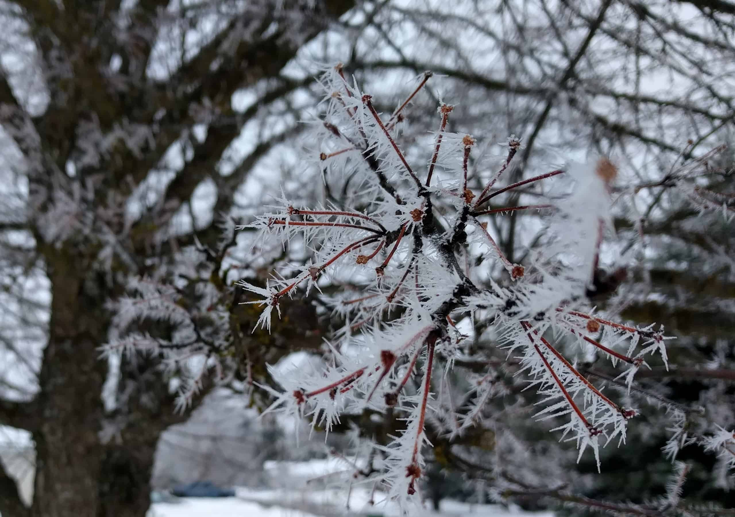 Snow Spikes