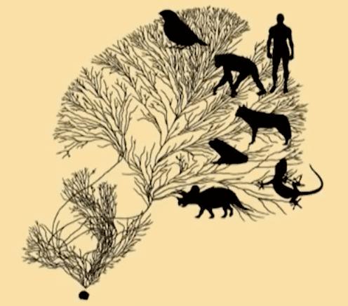 Evolution's Tree