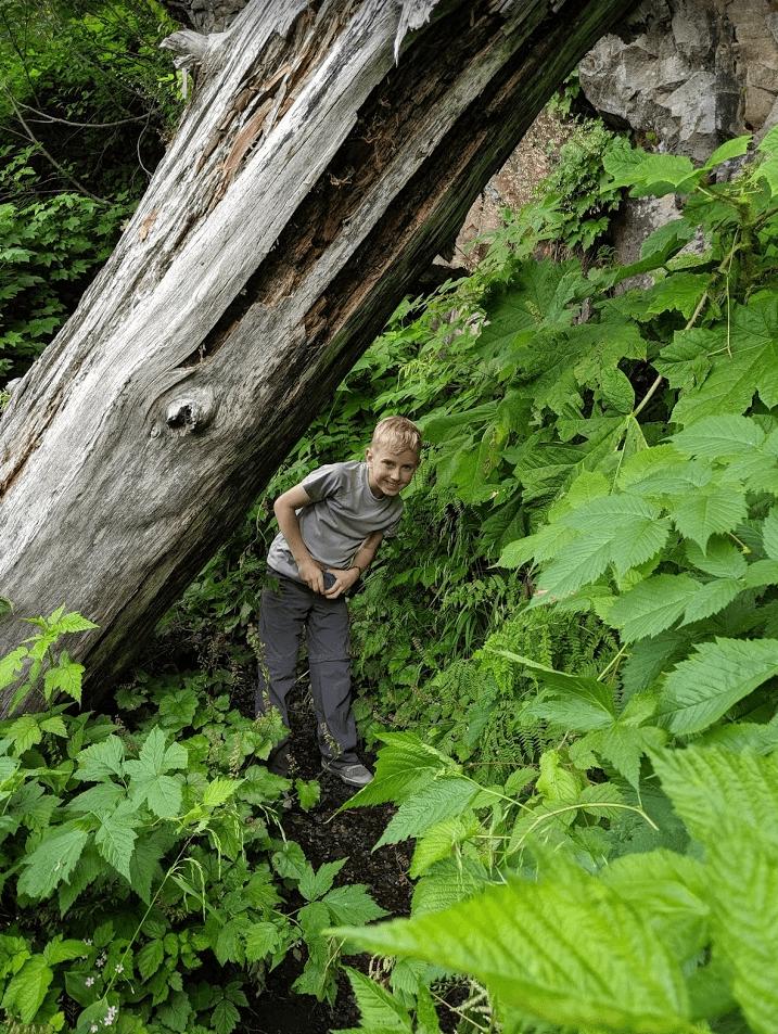 Boy under a fallen tree