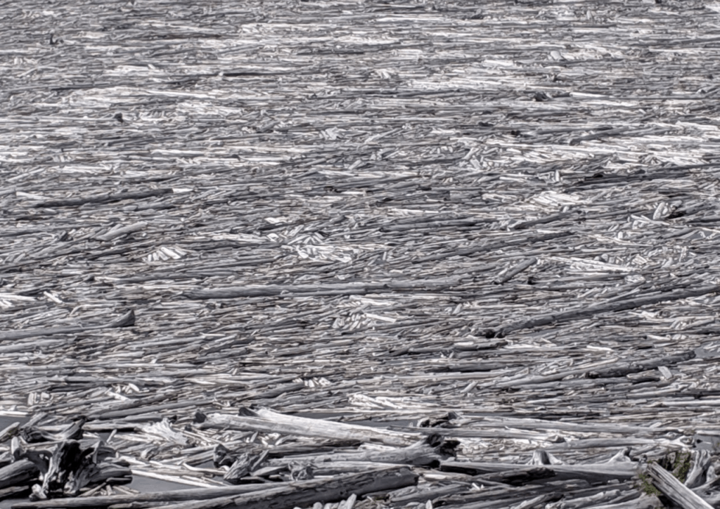 Floating Logs on Spirit Lake
