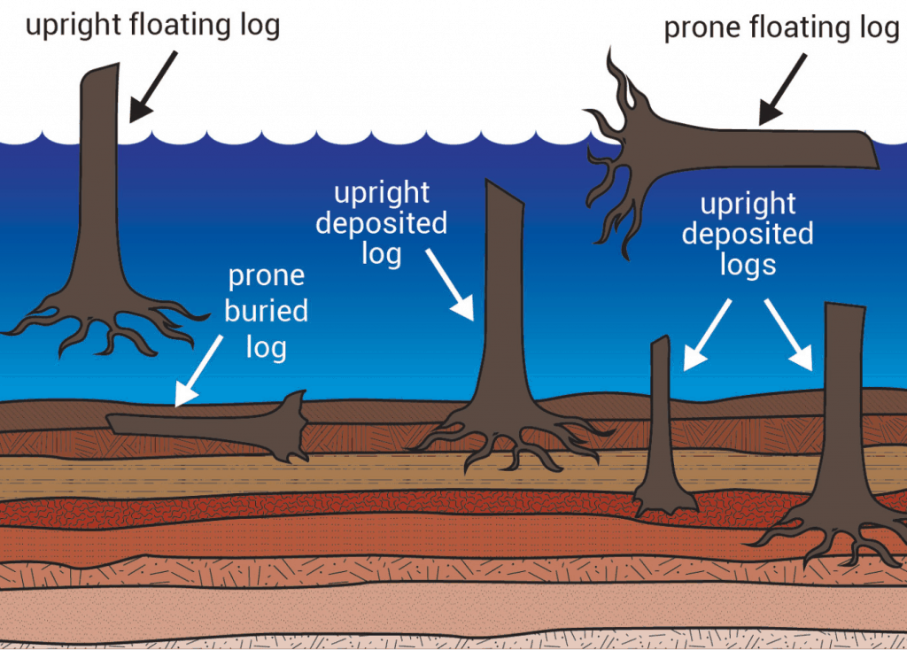Trees shown in different layers at Mt. St. Helens Spirit Lake